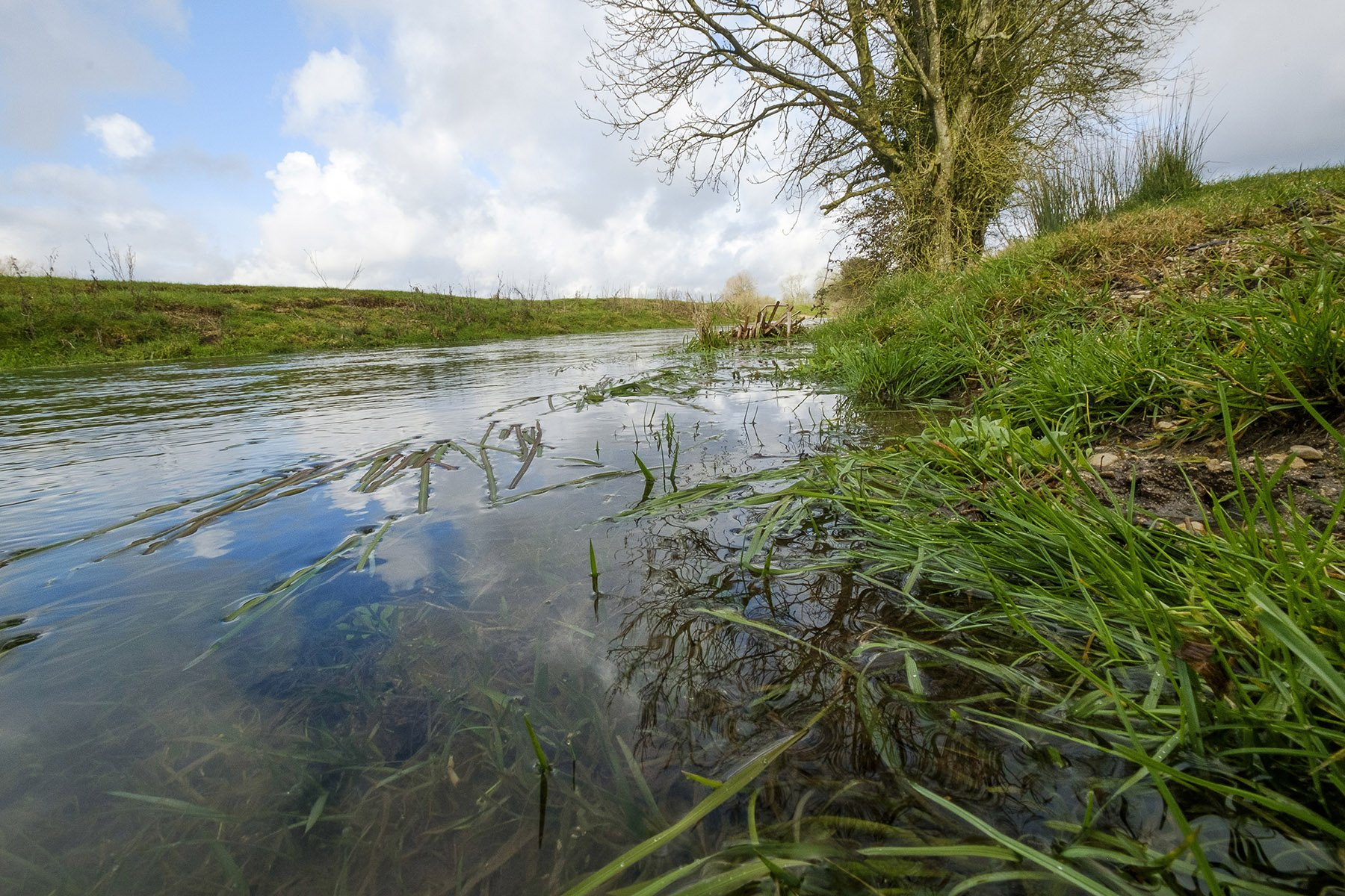 Read more about the article The Thames through Neigh Bridge Country Park